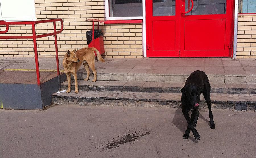Бездомные собаки на Верхнем Посаде