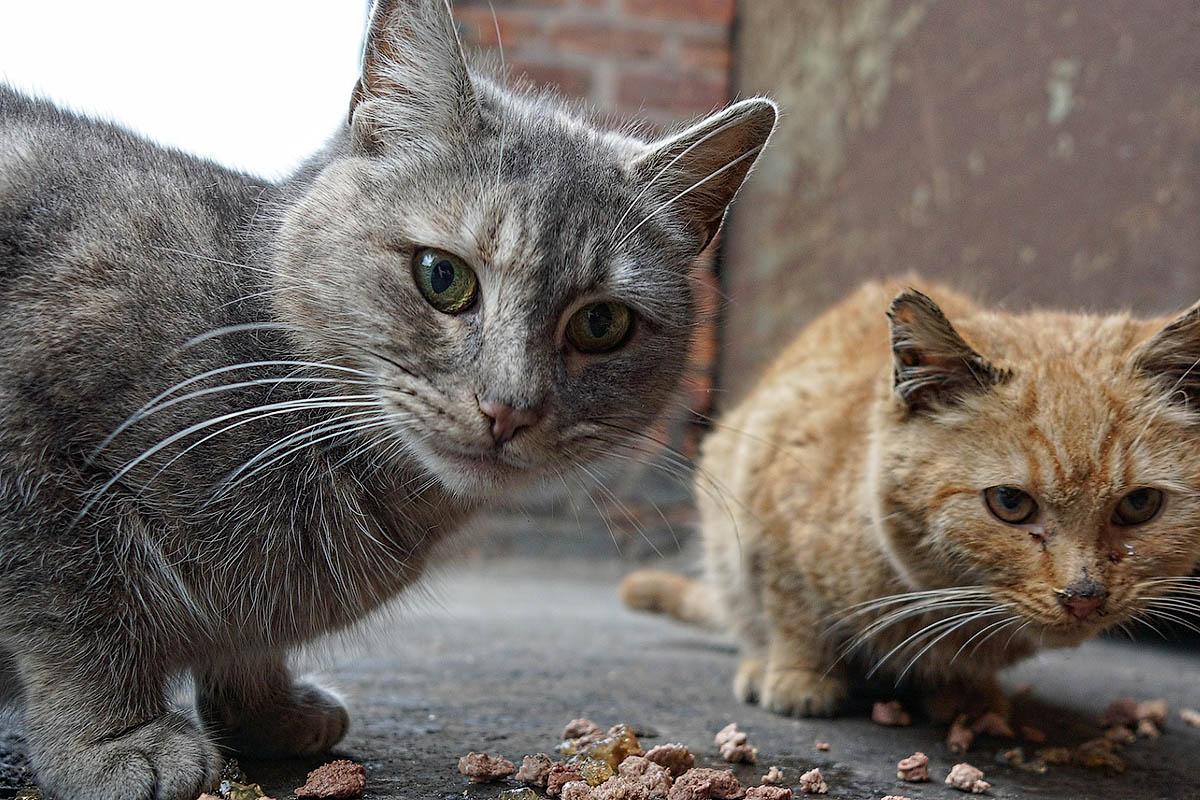 Подвалы для бездомных животных