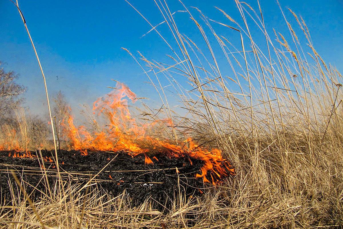 Пал сухой травы – преступление!