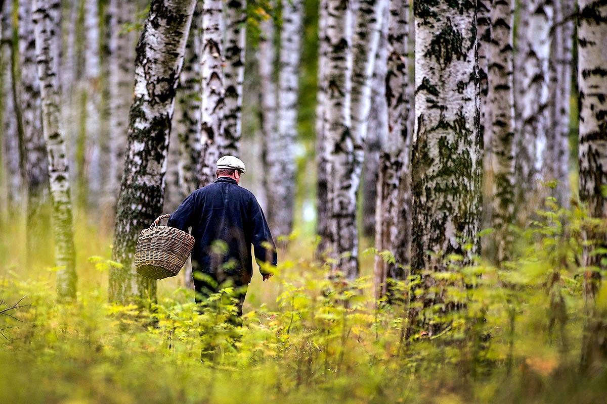 Тихая охота – советы грибников