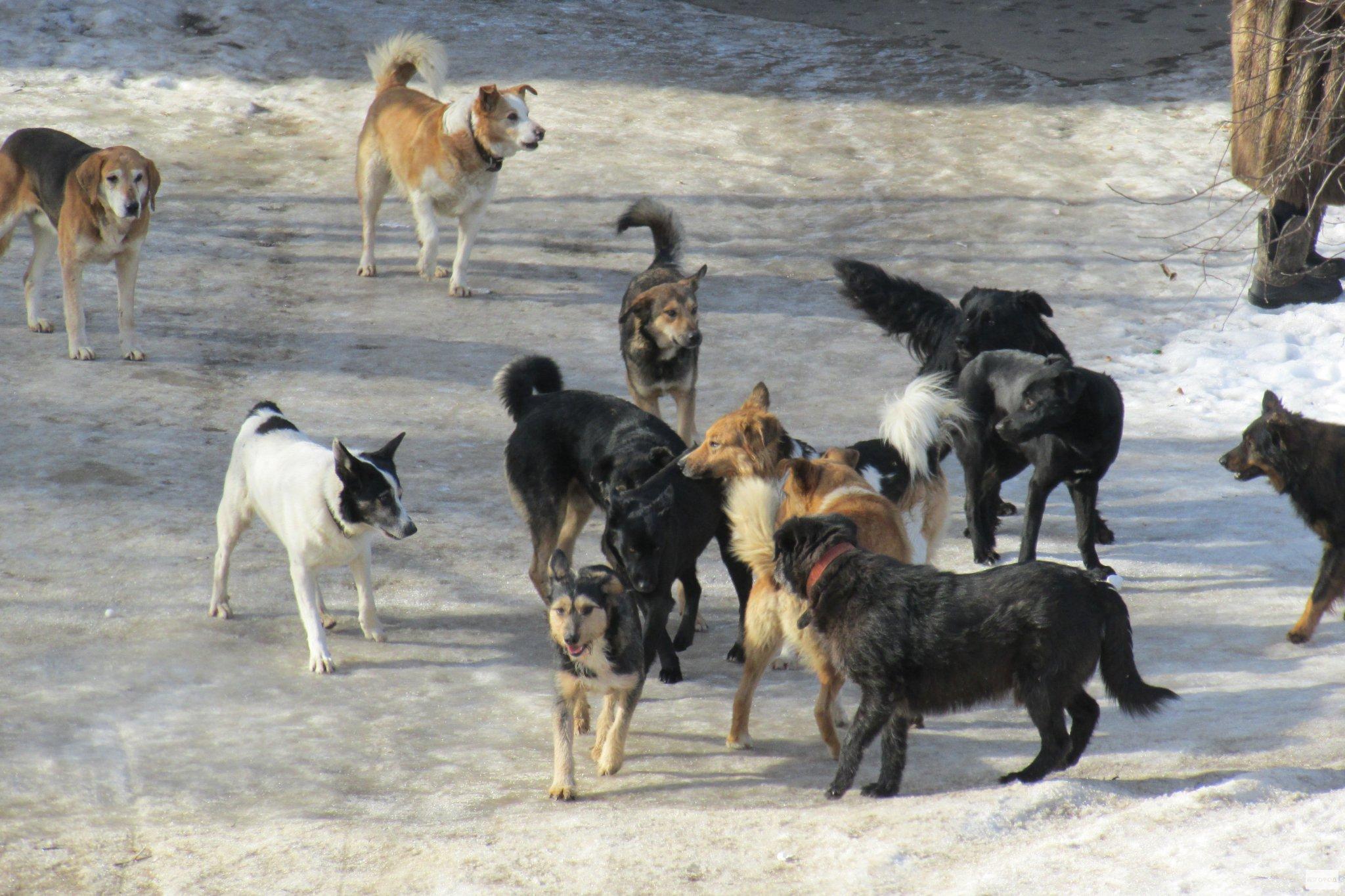 Общественная палата обсудила проблему беспризорных животных