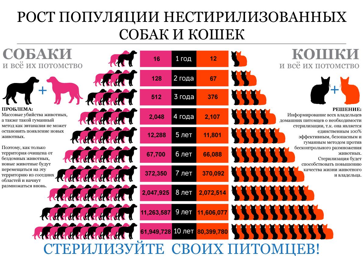 Волонтерская группа помощи бездомным животным города Звенигорода