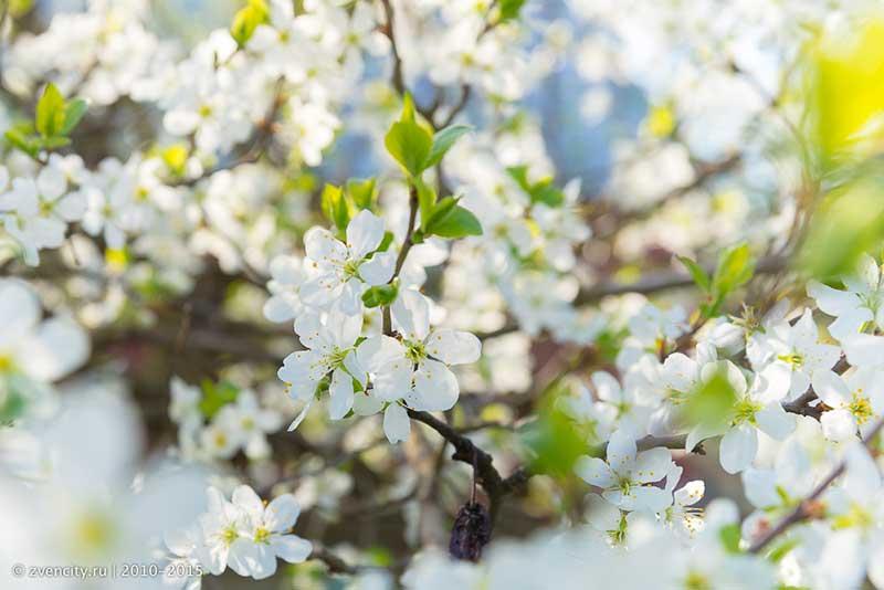 А на улице тем временем весна